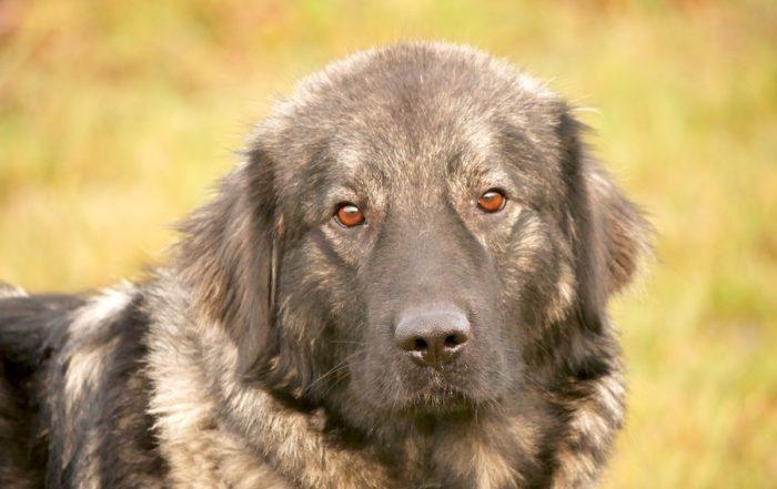 eSports und Charity für Tierheim Ludwigsburg
